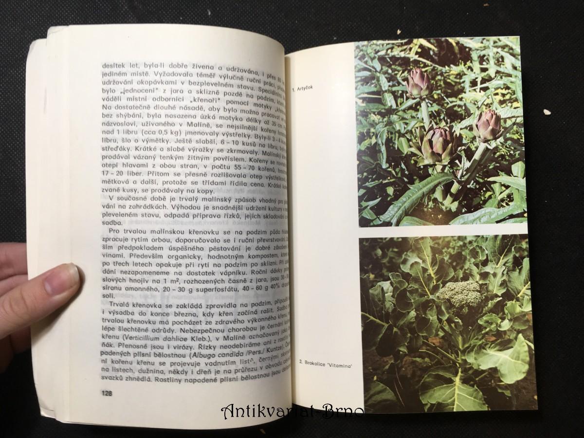 Pěstování a použití méně známých zelenin