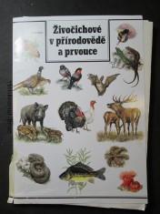 náhled knihy - Živočichové v přírodovědě a prvouce