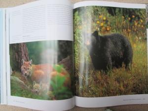 náhled knihy - Národní parky a divoká příroda Kanady