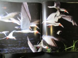 náhled knihy - Džungle uprostřed bažin : atlas zvířat, rostlin a lidí v nejrozsáhlejších mokřadech na Zemi
