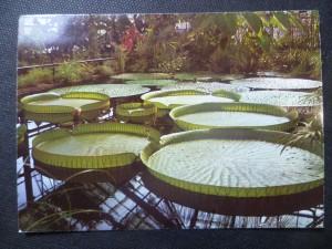 náhled knihy - Liberec - Severočeská botanická zahrada. Victorie královská - největší tropická vodní rostlina světa