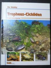 náhled knihy - Ihr Hobby: Tropheus-Cichliden