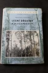 náhled knihy - Lesní dřeviny a jejich porosty, část III.