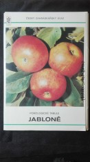 náhled knihy - Pomologické tabule: jabloně