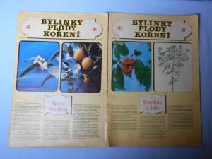 náhled knihy - Bylinky, plody, koření 1. Rostliny a lidé, 2.