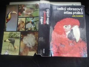 náhled knihy - Velký obrazový atlas ptáků
