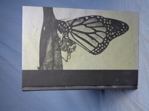 náhled knihy - Motýlí kůže
