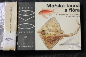 náhled knihy - Mořská fauna a flóra : pro čtenáře od 12 let